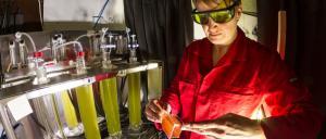 Making microalgae do the work with engineered LED lighting