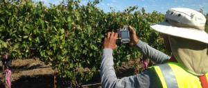 Remote sensors and aerial imagery are being used to maximise irrigation efficiencies in one of Australia's most famous wine regions.